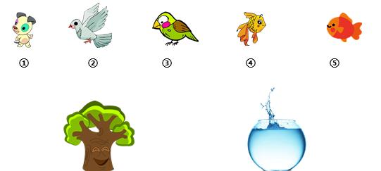小班数学动物分类