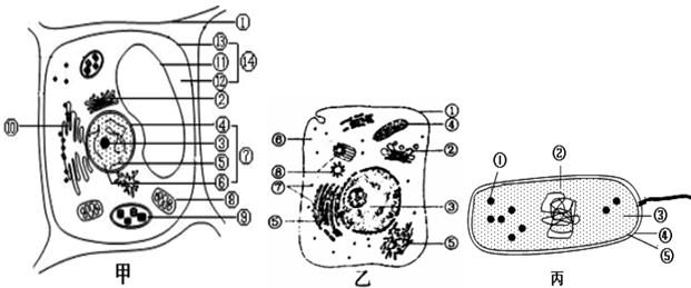 """""""如图是细胞的亚显微结构模式图,请据图回答.""""习题详情"""