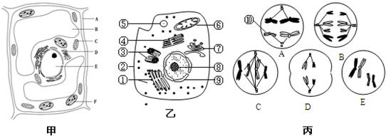 动物细胞亚显微结构模式图手绘展示