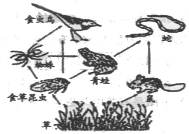 """生态系统中的食物链和食物网知识点 """"如图是某生态系统食物网图,请"""