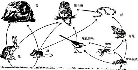 如图是一个草原生态系统的食物网简图.请据图回答