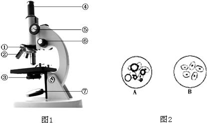 如图1为普通光学显微镜的结构 示意图 ,请据图回