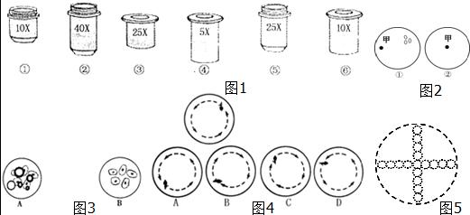 描述: 【知识点的认识】一、显微镜的构造 显微镜的种类很多,我们常用的为普遍光学显微镜.显微镜可分为两个部分:机械部分和光学部分. (一)机械部分 1、镜座:为显微镜最下面的马蹄形铁座.其作用是支持显微镜的全部重量.使其稳立于工作台上. 2、镜柱:镜座上的直立短柱叫做镜柱. 3、镜臂:镜柱上方的弯曲的弓形部分叫做镜臂,是握镜的地方.镜臂和镜柱之间有一个能活动的倾斜关节,可使显微镜向后倾斜,便于观察.4、镜筒:安装在镜臂上端的圆筒叫做镜筒.上端安装目镜,下端连接转换器. 5、转换器:镜筒下端的一个能转动的圆