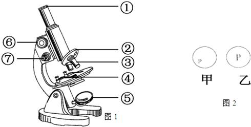 如图1是显微镜结构图,请回答下列问题