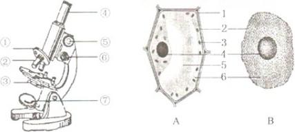 如图分别为显微镜结构和细胞结构示意图,请据图回答下列问题