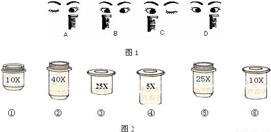 下面是对显微镜的使用过程中作出的一些基本判断