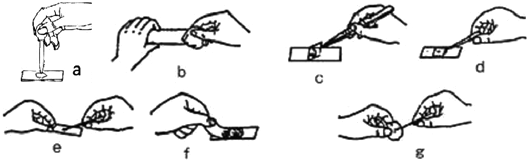"""""""(1)使用显微镜观察时,转动粗准焦螺旋,.""""习题详情"""