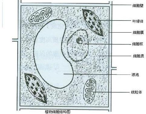 画出一个动物细胞和一个植物细胞结构图,并标出结构名称.