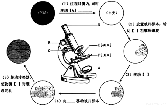 """如图是显微镜结构示意图和""""制作洋葱表皮细胞"""