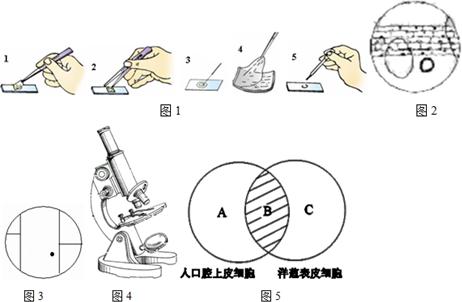 (7分)下图为植物细胞结构模式图,请按要求回答有关问题
