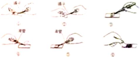 """装片观察植物细胞知识点 """"显微镜下观察到的洋葱鳞片叶表皮结构图是_."""