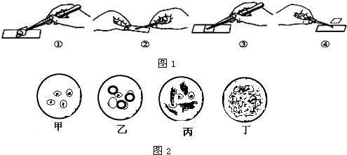 如图1是洋葱表皮细胞装片制作的几个步骤,请回答