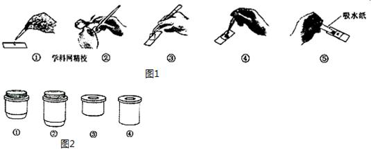 如图1表示制作并观察洋葱鳞片叶表皮细胞临时装片的部分步骤,请据图回