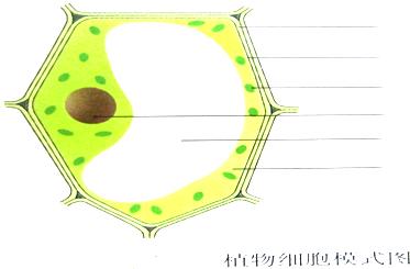 植物细胞的基本结构知识点