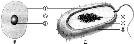结构_下面是动物细胞和细菌的结构模式图.请据图回答
