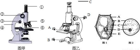 (1)染色:滴稀碘液染色.制作人口腔上皮细胞临时装片时,染色所用的液体是碘液. (2)植物细胞与动物细胞的区别:植物细胞具有细胞壁、叶绿体和液泡,动物细胞没有.在显微镜下观察到的人口腔上皮细胞的结构图应该是上图中的B. (3)细胞壁位于细胞的最外面,其主要成分是纤维素和果胶,对细胞起支持和保护作用. (4)胞膜紧贴在细胞壁的内面,对细胞有保护作用但没有支持作用,其主要功能是控制物质进出,让对细胞有用的物质不能通过细胞膜出来,有害的物质也不能进入细胞. (5)胞核中有能被碱性染料染成深色的物质叫做染色体,它