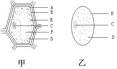 动植物细胞都具有细胞膜,细胞质,细胞核和线粒体等结构.