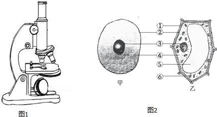 如图是植物细胞和动物细胞的结构示意图