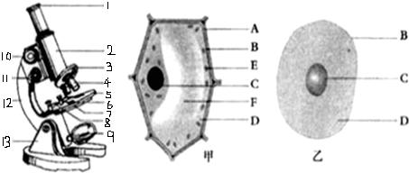 """""""习题详情  (1)小明同学用显微镜观察洋葱表皮细胞时,首先要对光;对好"""