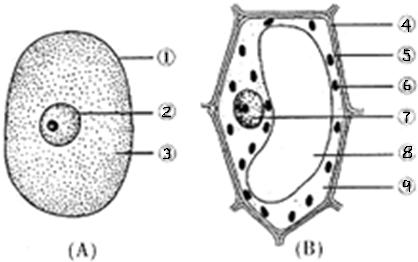植物细胞与动物细胞都具有的结构是