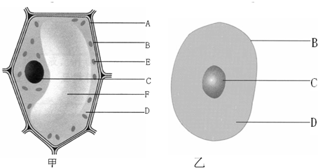 如图是动物细胞和植物细胞的结构模式图,请据图回答以下问题