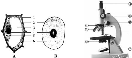 动植物细胞一般都有的结构是