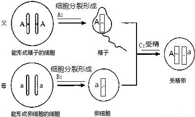 (3)①存在于动植物细胞的&nbsp