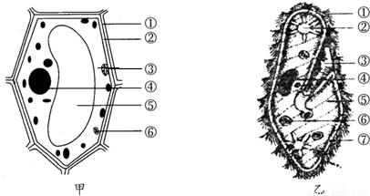 如图甲为植物细胞模式图,乙为草履虫结构示意图,请据图作答:甲中的3