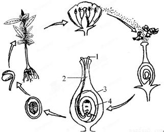 回答下列问题: (1)桃花开发时常看到蜜蜂,蝴蝶在花丛中飞舞,它们正忙