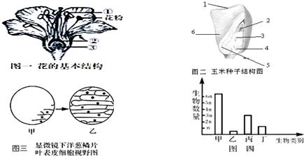 在观察洋葱鳞片叶内表皮细胞时,如已看到图三中甲所示的物象,要想