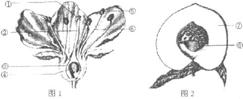 (2)图中结构[①],[②]和[③]组成的结构是雌蕊,结构[⑤]和[⑥]