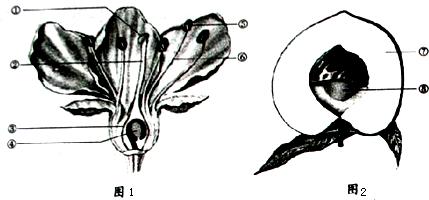 如图是桃花的基本结构示意图,请根据图回答