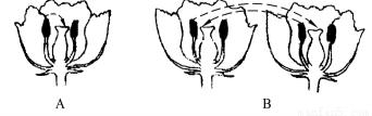 下面四个点是什么字_下面的两个图分别表示两种传粉方式