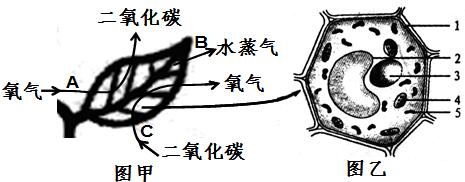 图甲表示发生在植物体内的某些生理过程,图乙为该植物叶肉细胞结构图