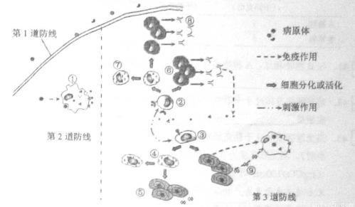 共11分)下图表示某细胞器的部分结构