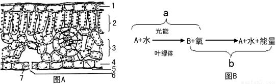 (9分)下图是叶的平面结构示意图和叶在