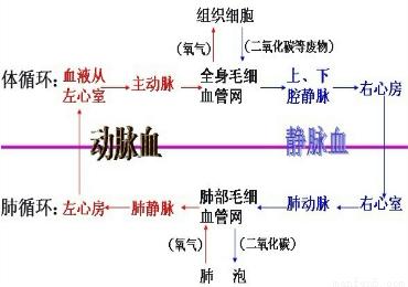 """""""如图为心脏结构图,据图回答:(1)写出下.""""习题详情"""
