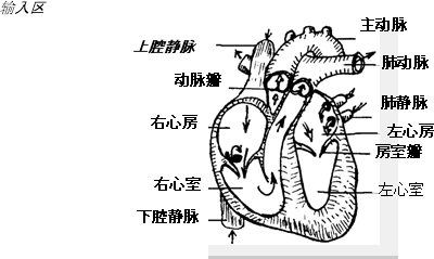 > 初中心脏结构简图_初中生物心脏简图  如图是心脏结构示意图.