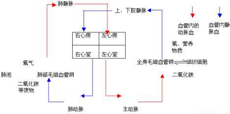 如图为人体血液循环简图,图中1,2,3,4表示图片