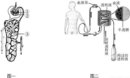 肾单位是形成尿的结构和功能单位,图一是肾单位的结构示意图,图二是肾