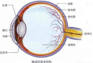 """据""""眼球的基本结构图""""回答下列问题"""
