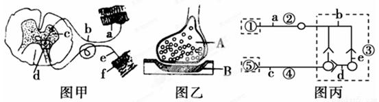 (6分)氨基丁酸(GABA)作为哺乳动物中枢神经系统中广泛分布的神经递质,在控制疼痛方面的作用不容忽视,其作用机理如下图:  (1)GABA在突触前神经细胞内合成后,贮存在 内,以防止被胞浆内其他酶系所破坏。当兴奋抵达神经末梢时,GABA释放,并与突触后膜上的 GABA受体结合。该受体是膜上某些离子的通道,当GABA与受体结合后,通道开启,使阴离子内流,从而抑制突触后神经细胞动作电位的产生。如果用电生理微电泳方法将GABA离子施加到离体神经细胞旁,可引起相同的生理效应,从而进一步证明了GABA是一种 (兴
