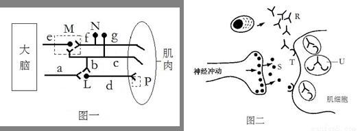 """""""(9分)下图为神经-肌肉连接示意图.据图.""""习题详情"""