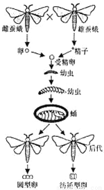 如图是蝗虫外部形态示意图,请据图作答 1 蝗虫身体是由① ② ③三部分构成的.①②③分别代表蝗虫的那些结构 其中感觉和取食的中心是 运动的中心是