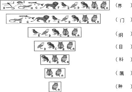 动物的分类知识点