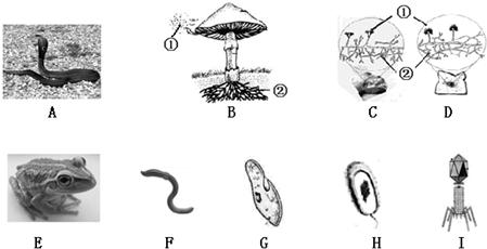 动物分类单元结构图