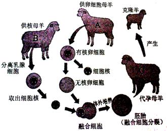 如图是克隆过程示意图,请据图回答