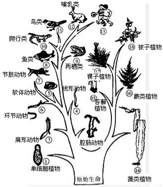 地球上最早出现的脊椎动物是古代的