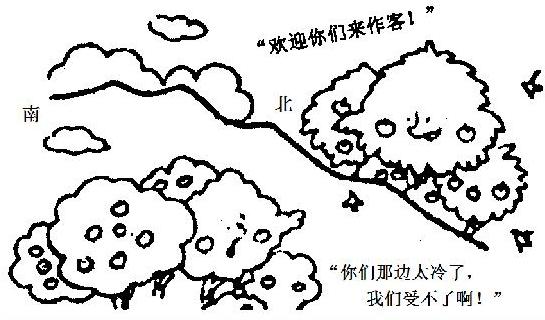 稻田简笔画步骤