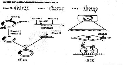 下图是植物细胞杂交过程示意图